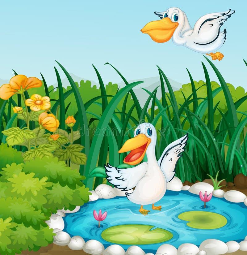 有鸭子的一个池塘 皇族释放例证