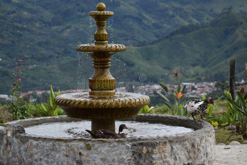 有鸭子的乡下喷泉在庭院里 库存图片