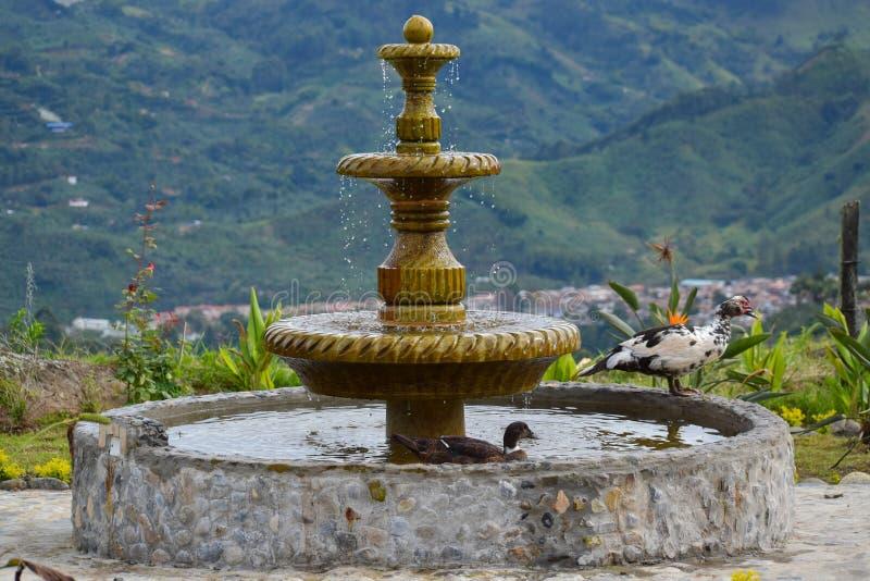 有鸭子的大喷泉在庭院里 库存照片