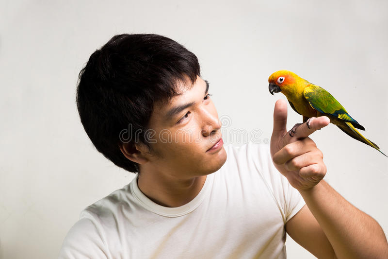 有鹦鹉的-太阳Conure亚裔人 免版税库存照片