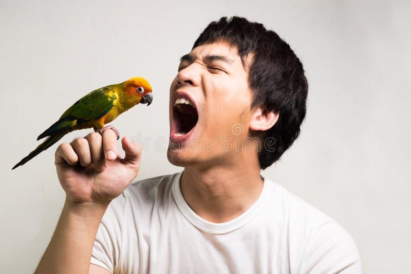 有鹦鹉的-太阳Conure亚裔人 图库摄影