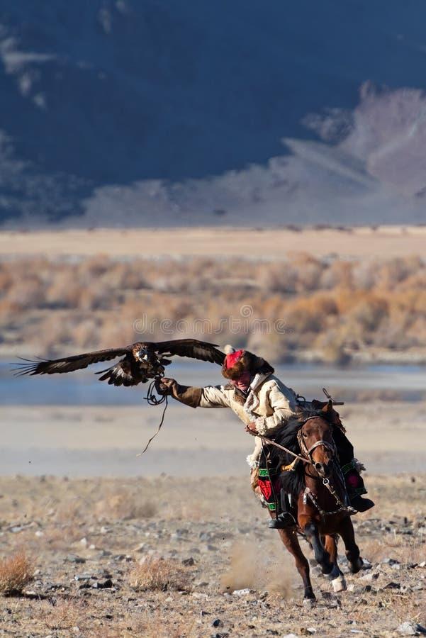 有鹫的未知的猎人在猎鹰训练术显示他的经验 库存图片