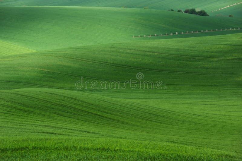 有麦田的绵延山和树 与绿草的惊人的神仙的minimalistic春天风景调遣 库存图片