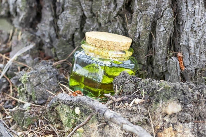 有黄柏盖帽的玻璃瓶有绿色黄色花蜜油的 位于在一棵针叶树下 库存图片