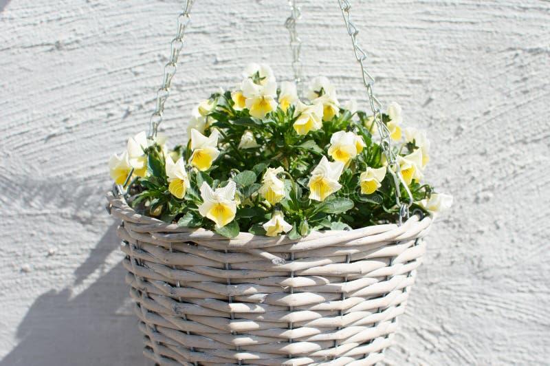 有黄色花的柳条罐 库存图片