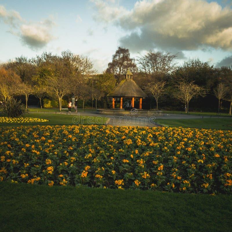 有黄色花的都伯林公园 免版税库存照片