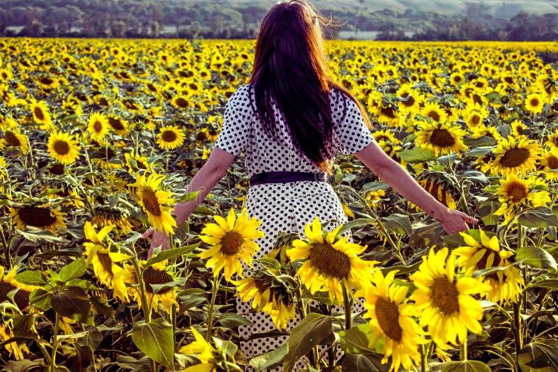 有黑暗的长的头发的一个女孩横跨领域走用开花的黄色向日葵 罗斯托夫地区,经济领域,开花har 免版税库存图片