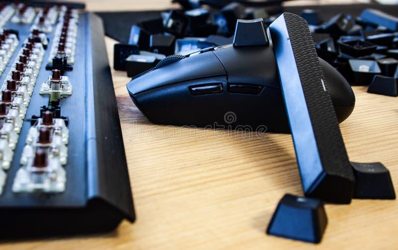 有黑老鼠的被折除的键盘 库存图片