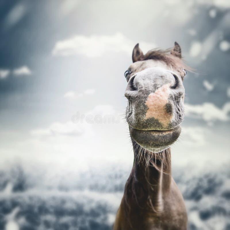 有鼻子的滑稽的马面孔枪口在秋天阴云密布自然背景 图库摄影