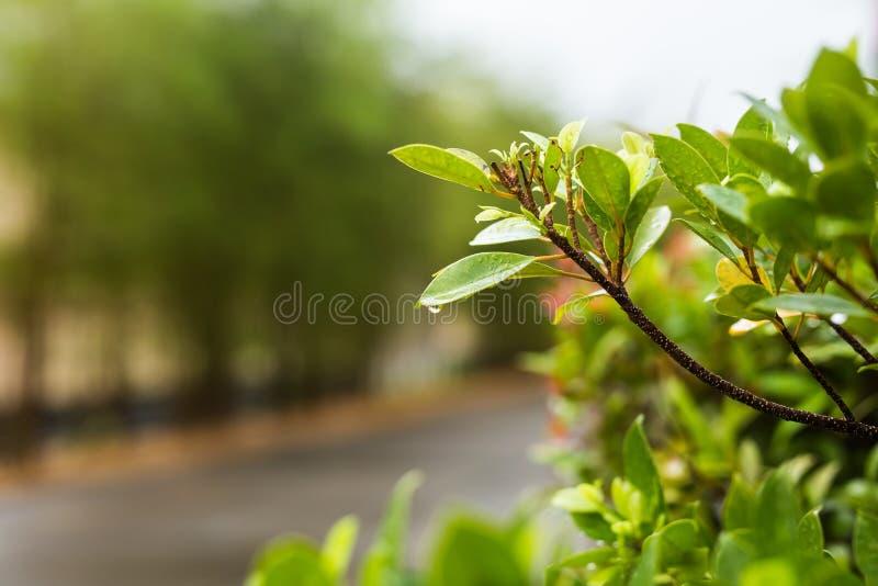 Download 有水下落的植物叶子 库存图片. 图片 包括有 下落, 特写镜头, 绿色, 小滴, 叶子, 工厂, bossies - 72355507