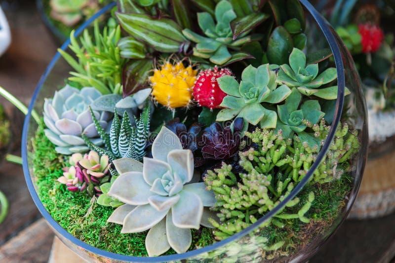 有仙人掌多汁植物植物的玻璃容器 免版税图库摄影