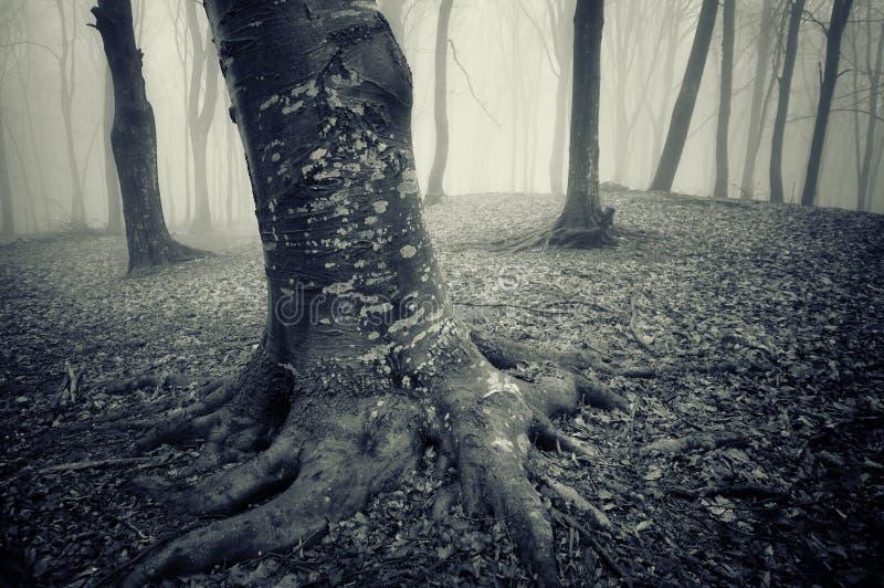 有令人毛骨悚然的看的树的黑暗的森林在万圣夜 免版税库存照片