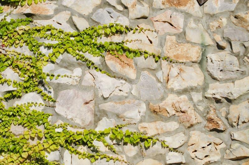 有绿叶的石墙 免版税库存图片