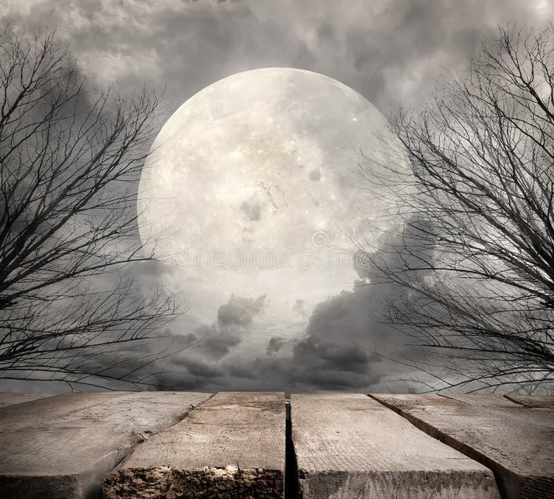 有满月的森林 免版税库存照片