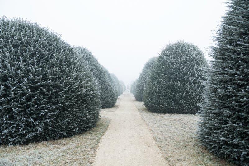 有冻树的土路带领入冬天雾 免版税库存照片