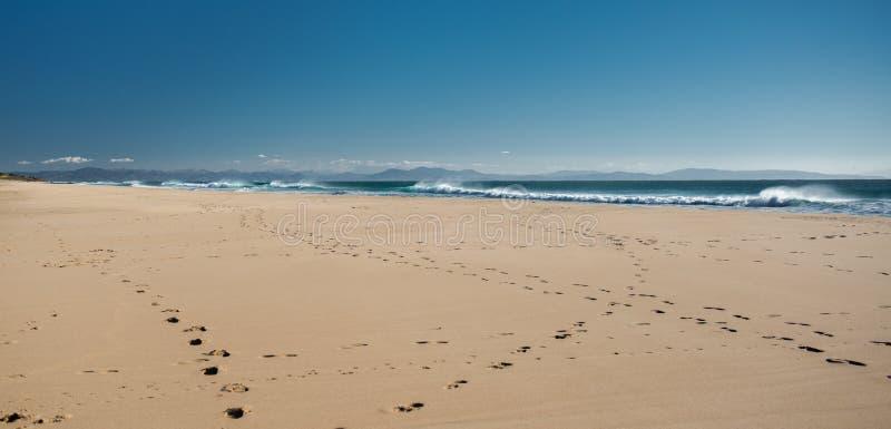 有须海滩 库存图片
