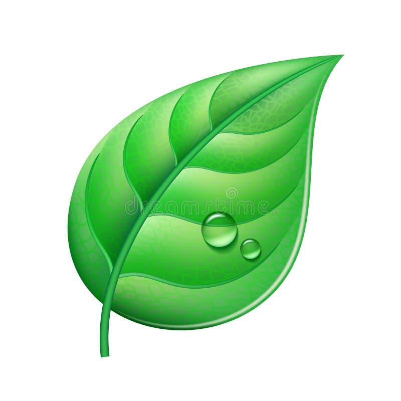 绿色叶子 皇族释放例证