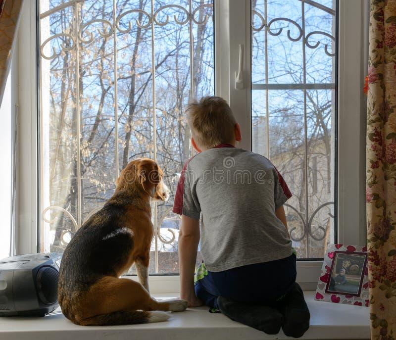 有他的看通过窗口的狗的小男孩 免版税库存图片