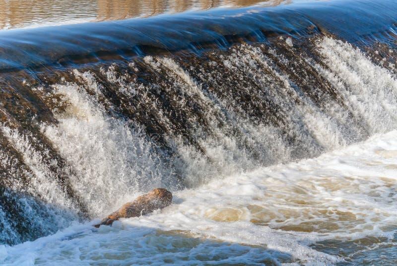 有死的鱼的河水测流堰 免版税图库摄影
