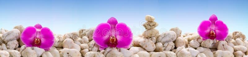有紫色兰花的全景 免版税库存照片