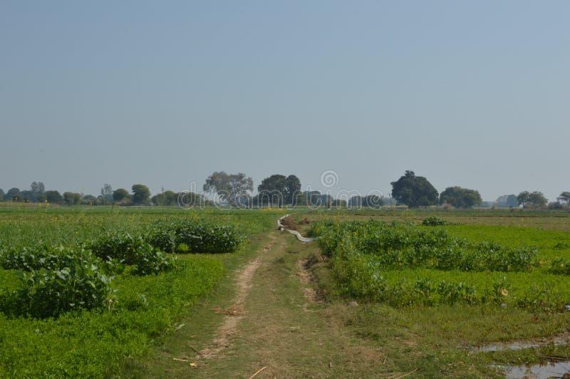 有绿色农业领域的庄稼土地 免版税库存图片