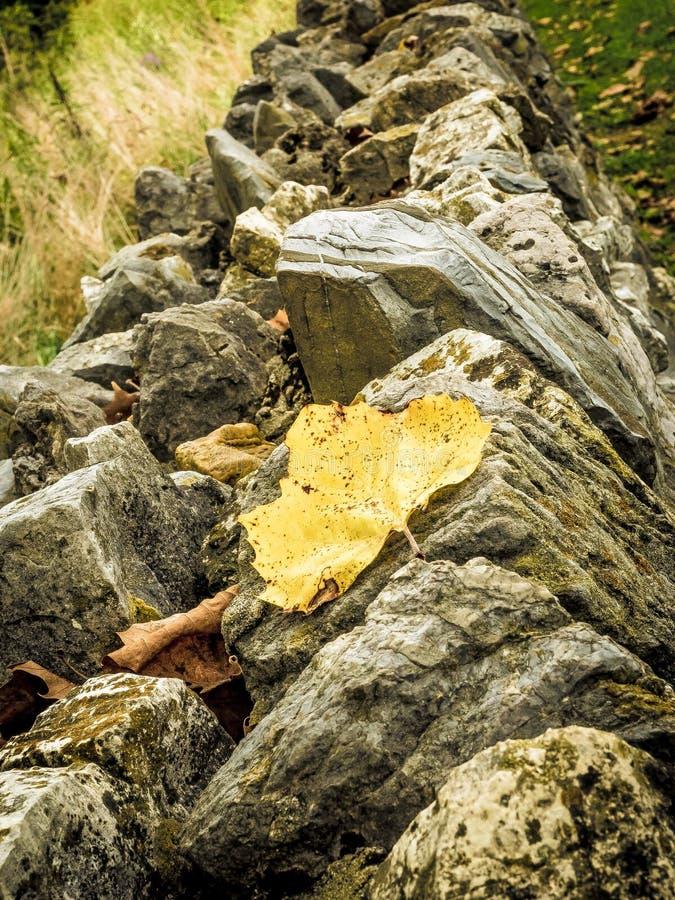 有黄色叶子的接合的石墙 免版税库存图片