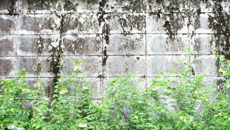 有绿色叶子的老墙壁 免版税库存照片