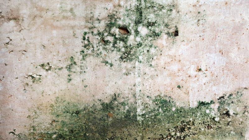 有绿色地衣和青苔的砖墙 库存照片
