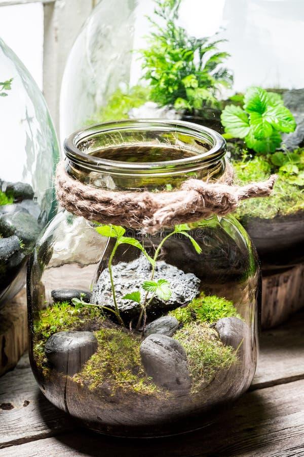 有活绿色森林的美丽的瓶子有自已生态系的 库存照片