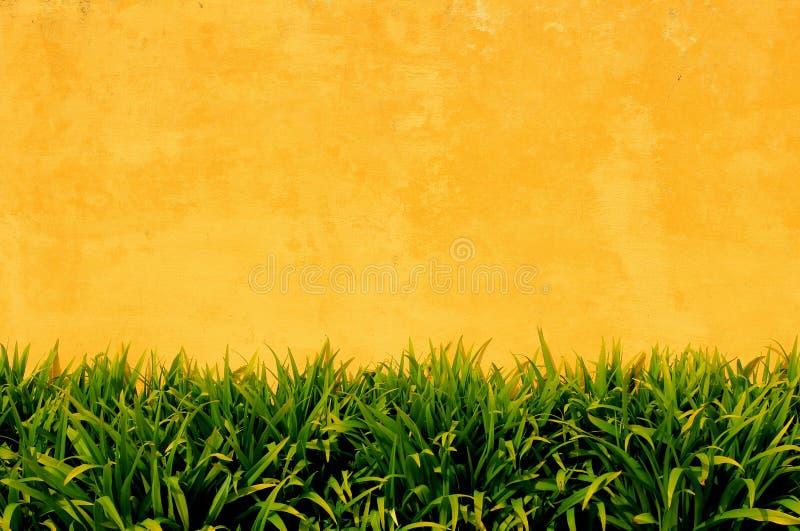 有绿色植物的黄色墙壁 免版税库存照片