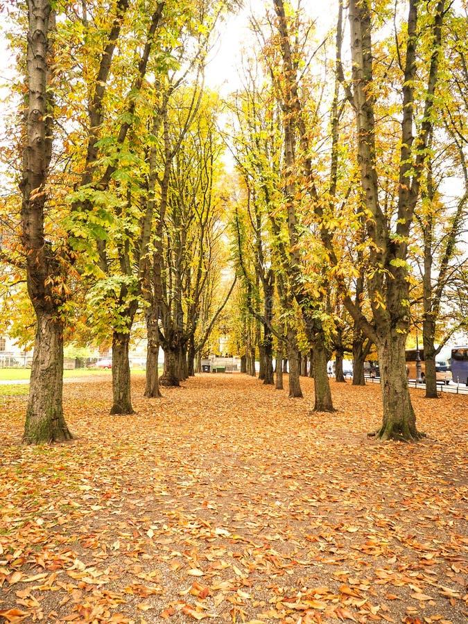 有黄色槭树叶子秋天的走道盖子 库存照片