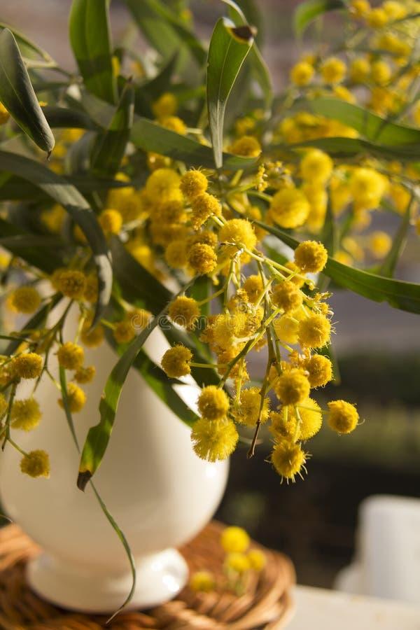 有黄色mimoza的投手在秸杆席子开花 图库摄影