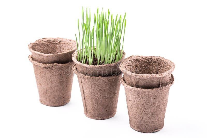 Download 有绿草的泥煤罐在白色背景 库存照片. 图片 包括有 春天, 草本, 查出, 空白, 从事园艺, 麦子, 泥煤 - 62530756