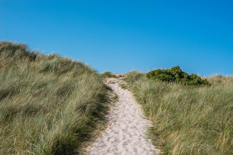 有绿草的海滩道路 免版税库存图片