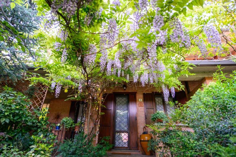 有紫藤花的庭院 库存图片