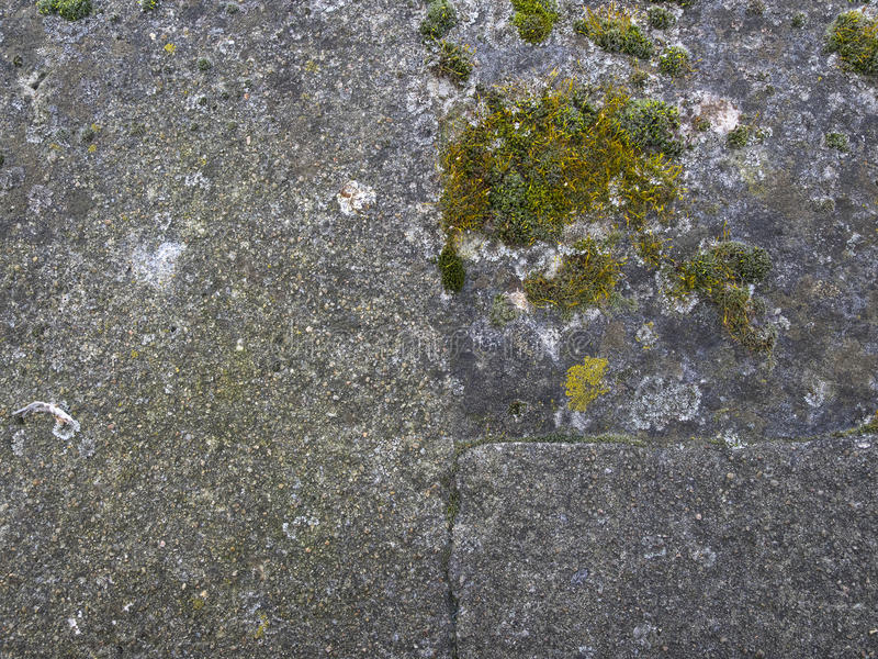 有绿霉的老石墙在巴黎 免版税库存照片