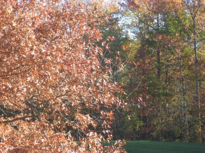 有Autum微风的落的叶子 库存图片