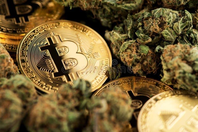 有Bitcoin Cryptocurrency硬币的大麻医疗大麻芽 库存图片