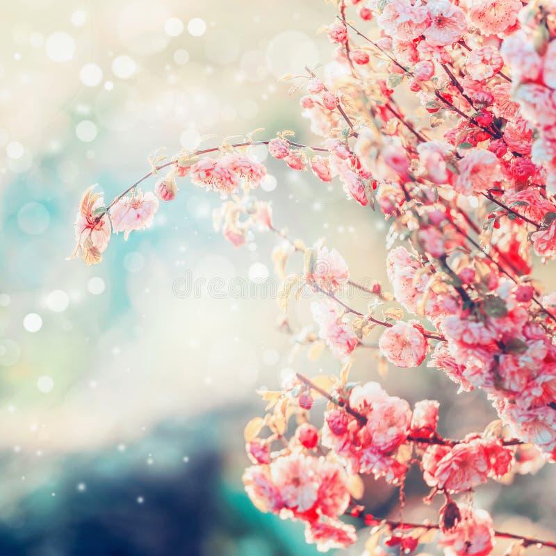 有bokeh、夏天或者春天自然的可爱的桃红色开花 免版税库存图片