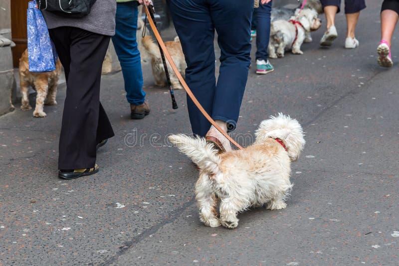 有Dandie Dinmont狗的人们在城市 免版税库存照片