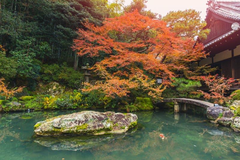 有koi鱼日本庭院的美丽的秋天池塘 免版税库存照片