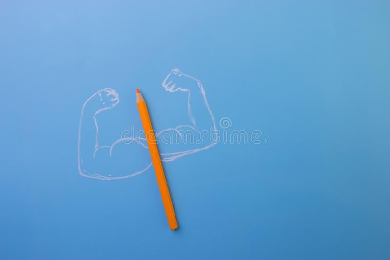 有musceles的颜色铅笔 免版税库存照片