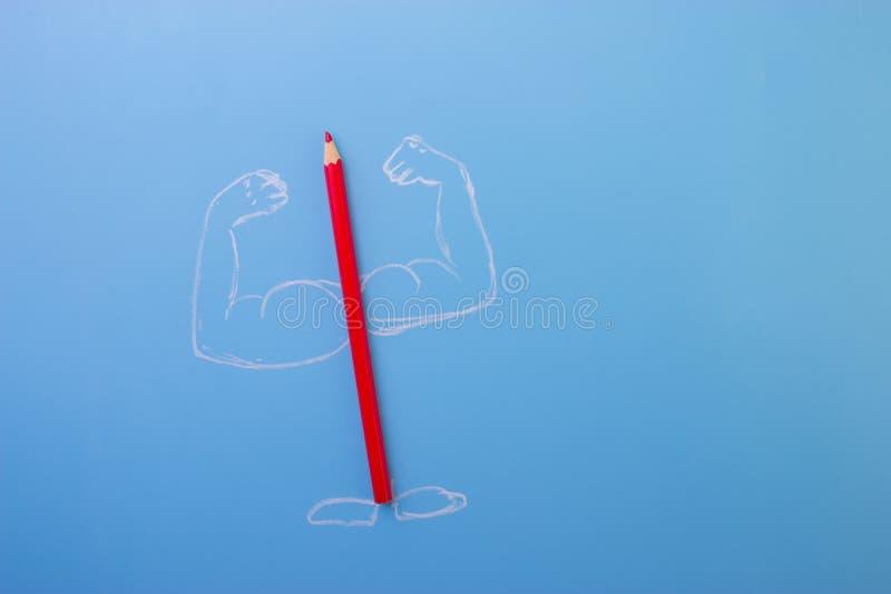 有musceles的颜色铅笔 免版税库存图片