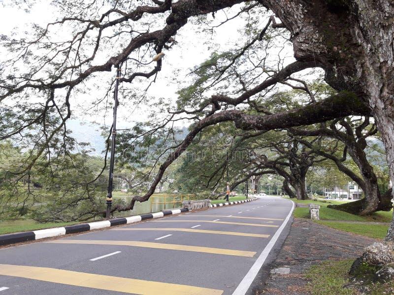 有raintrees行的一条风景路在湖附近的 免版税库存图片