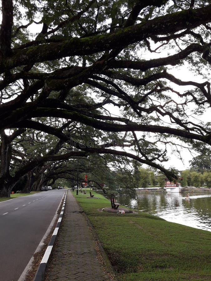 有raintrees行的一条风景路在湖附近的 库存照片