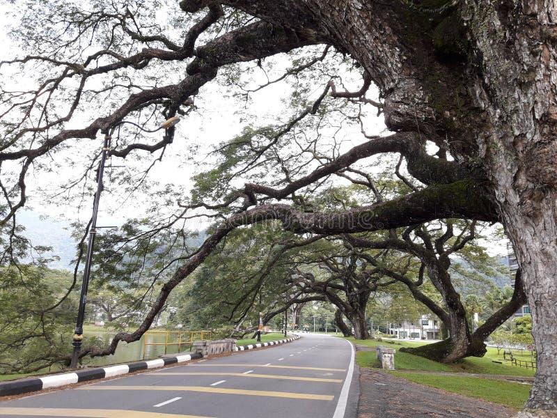 有raintrees行的一条风景路在湖附近的 免版税图库摄影