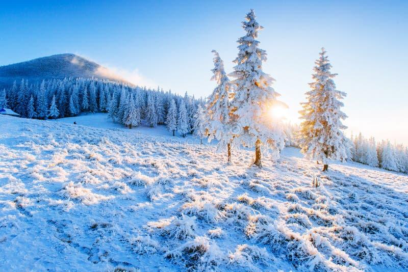 晴朗的冬天风景 库存图片