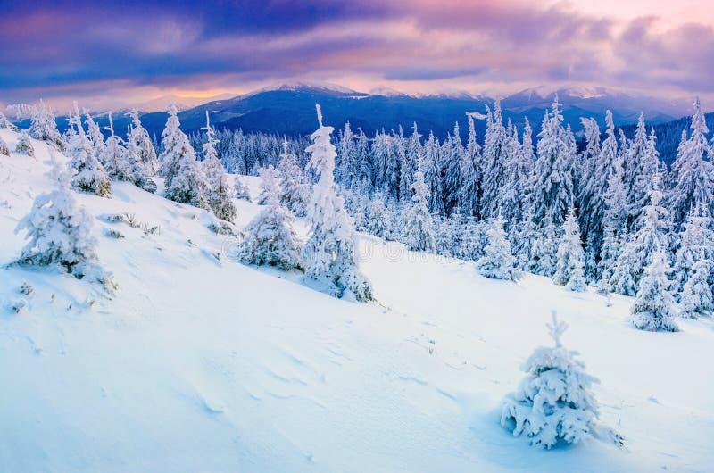 晴朗的冬天风景 库存照片