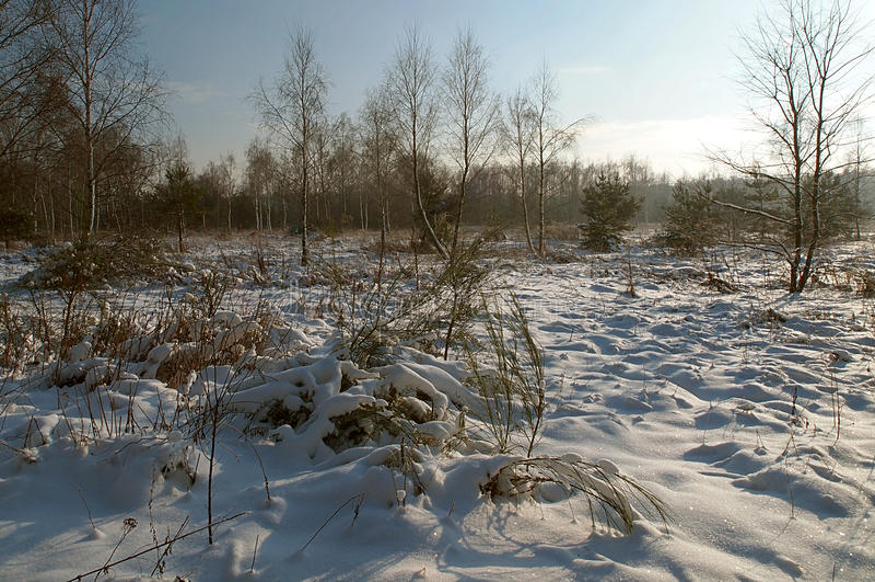 晴朗的冬天魅力 免版税库存图片
