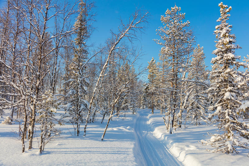 晴朗的冬日在有空的滑雪足迹的多雪的森林里 库存照片